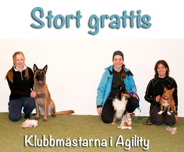 2013_12_20_km_agility
